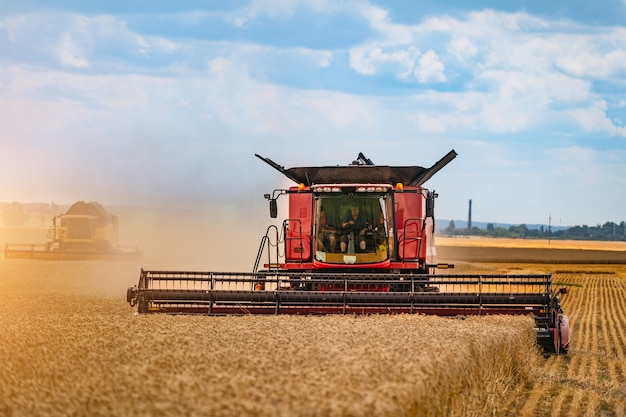 Colheitadeira em ação no campo de trigo. a colheita é o processo que reúne uma colheita madura dos campos.