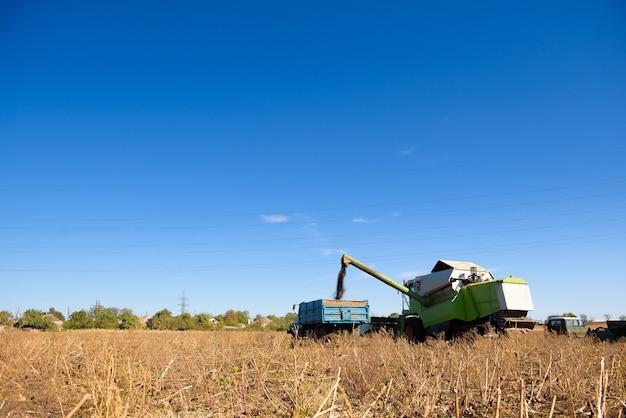 Colheitadeira em um campo de milho para a colheita.