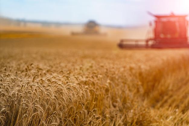 Colheitadeira. máquina de colheita para colher um campo de trigo.