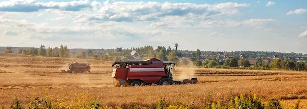 Colheitadeira remove trigo no campo