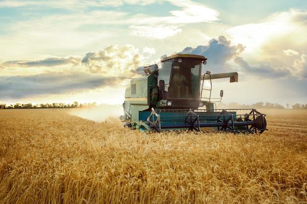 Colheitadeira trabalhando em um campo de trigo. no pôr do sol