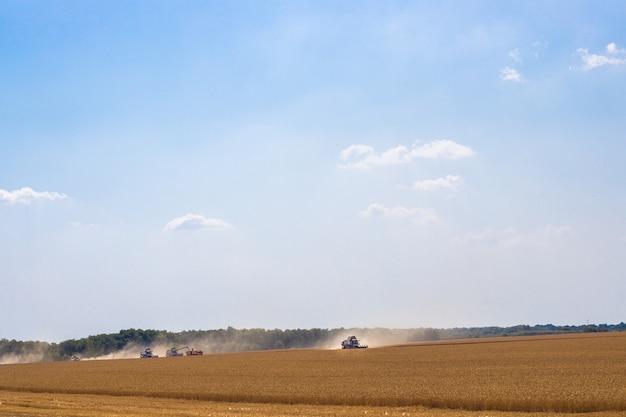 Colheitadeiras em um campo com trigo estão trabalhando na colheita