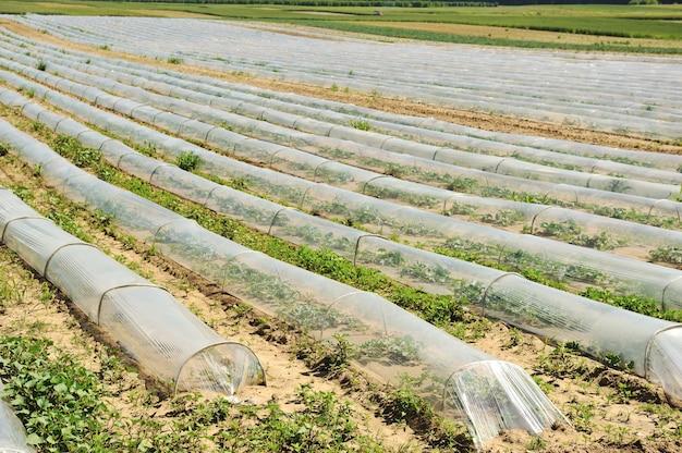 Colheitas na terra no campo em um ajuste rural.