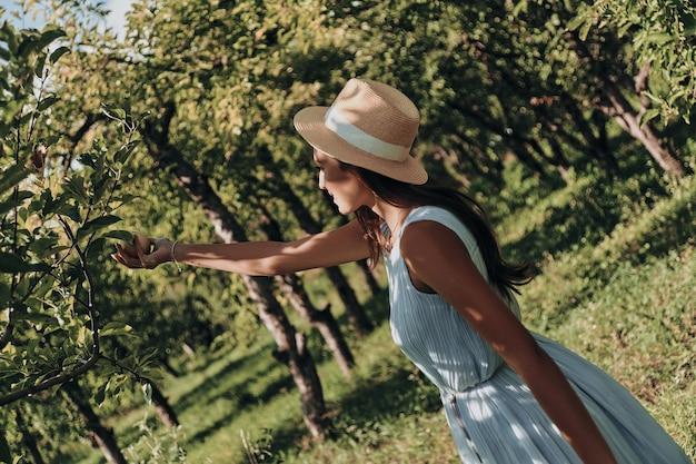 Colhendo apenas as melhores maçãs. mulher jovem e atraente colhendo maçãs em pé no jardim
