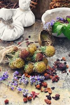 Colhendo ervas medicinais