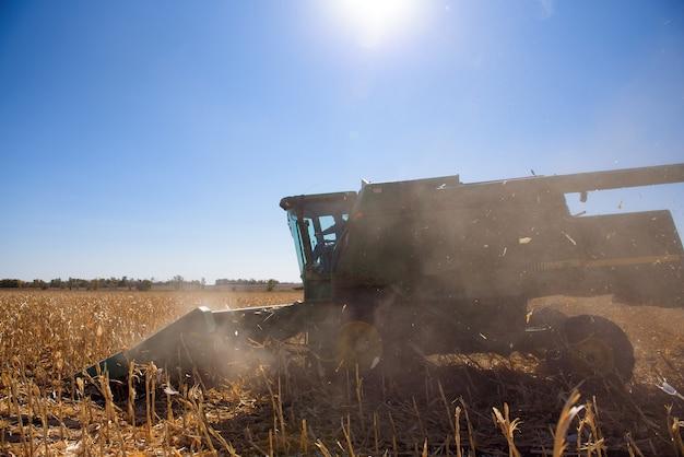 Colhendo o campo de milho no outono. colheita trabalhando no campo de milho.