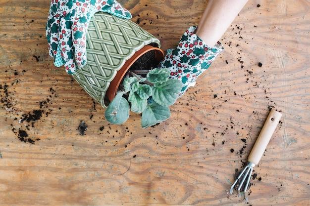 Colher as mãos tomando a planta do pote