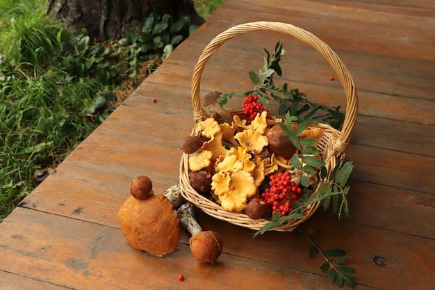 Colher cogumelos em uma cesta.