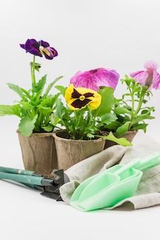 Colher de medida; ferramentas de jardinagem; pote de guardanapo e turfa com plantas de pansy e petúnia contra o pano de fundo branco
