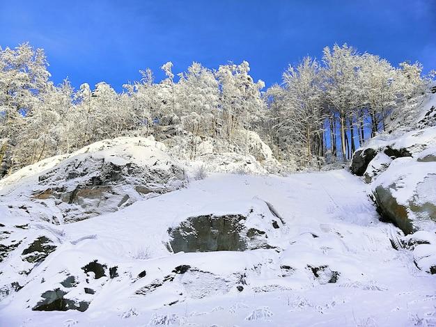 Colina coberta de árvores e neve sob a luz do sol e um céu azul em larvik, na noruega