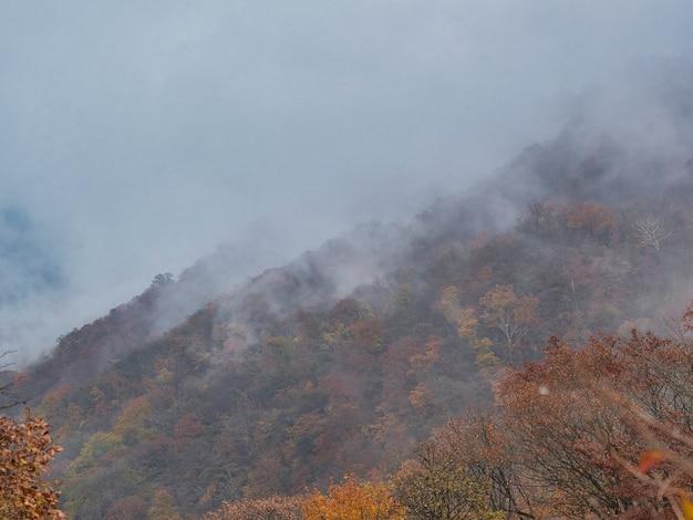 Colina coberta de florestas cobertas pela névoa com um fundo desfocado