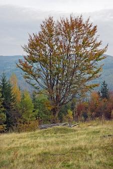 Colina de montanha no outono com faia na frente