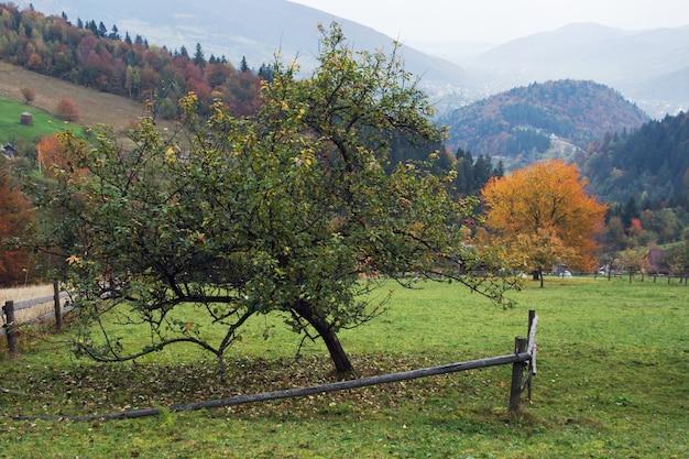 Colina de montanha no outono com macieira e cerca de madeira quebrada na frente