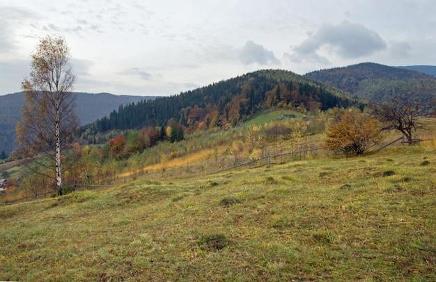 Colina de pastagem de montanha no outono com bétula na frente