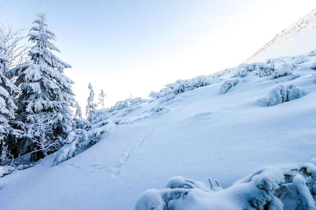 Colinas cobertas de neve nas montanhas