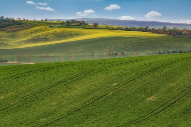 Colinas onduladas verdes