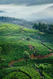 Colinas verdes de plantações de chá em munnar