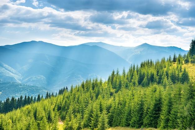Colinas verdes ensolaradas com floresta, céu azul e nuvens. paisagem natural