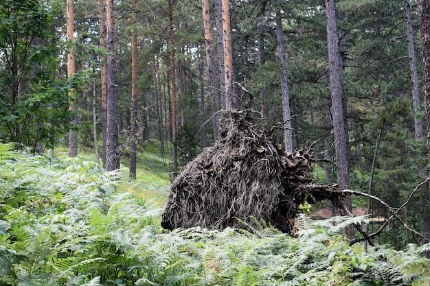 Colméia antiga na floresta