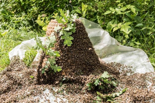 Colmeia de abelhas strawe velha artesanal para capturar abelhas na natureza