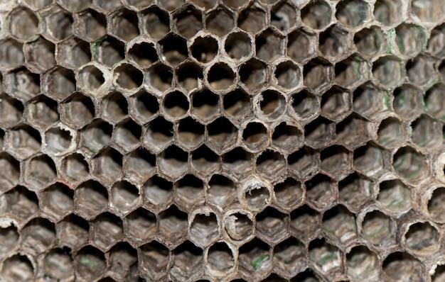 Colmeia de vespas secas close-up. fundo de colméia de vespa.