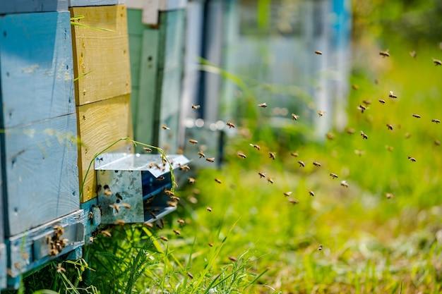 Colmeias coloridas de abelhas em um pasto no verão. colmeias em um apiário com abelhas voando para as placas de aterrissagem. apicultura. fumante de abelhas na colmeia.