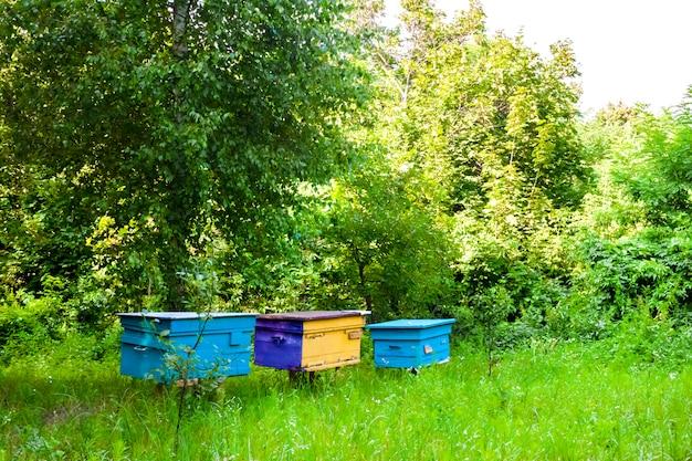 Colmeias coloridas no apiário em um jardim de verão
