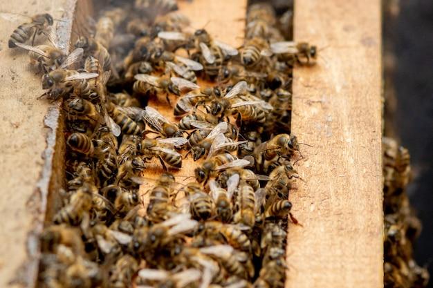 Colméias cuidando de abelhas com favos de mel e abelhas