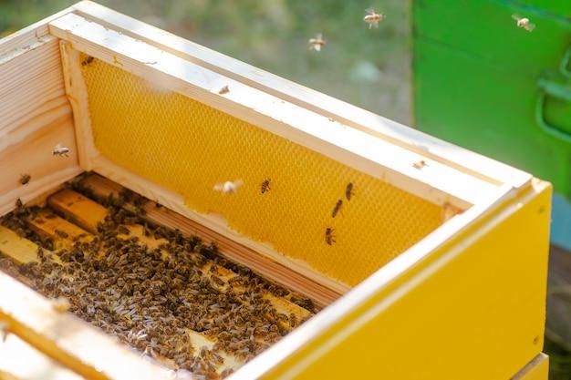 Colmeias de abelhas cuidando de abelhas com favos de mel e abelhas. o apicultor abriu a colméia para montar uma moldura vazia com cera para a colheita do mel.