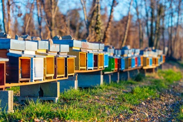 Colmeias de abelhas ficam lado a lado no campo no norte da itália