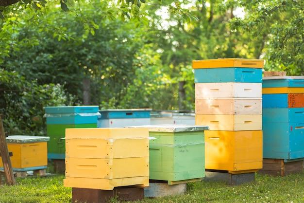 Colmeias de cascos múltiplos no apiário no verão