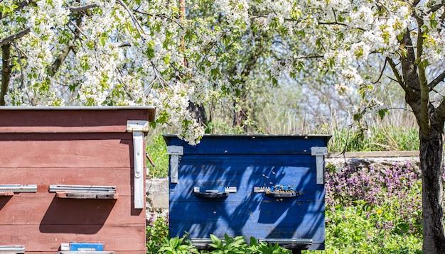 Colmeias grandes de madeira com abelhas no jardim da primavera