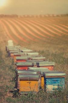 Colmeias no campo de girassol em provence, frança. tiro filtrado