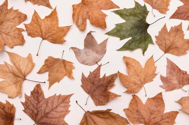 Colocação plana da coleção de folhas de outono