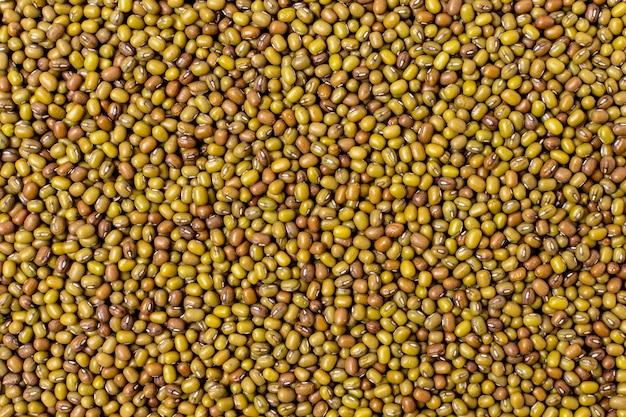 Colocação plana de azeitonas germinadas
