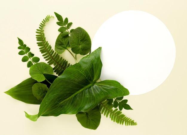 Colocação plana de variedade de folhas