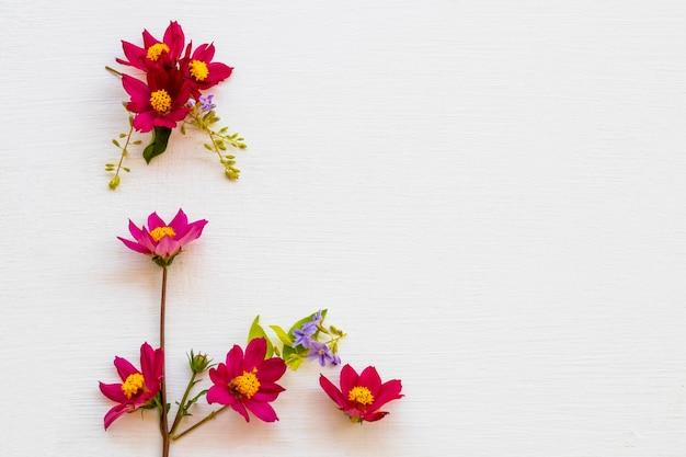 Coloful cosmos arranjo de flores em estilo de cartão postal