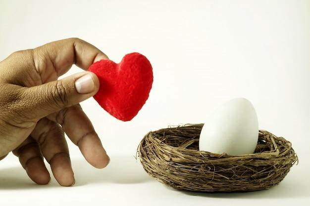 Coloque um coração no ninho de um pássaro perto de um ovo, como iniciar uma nova família.