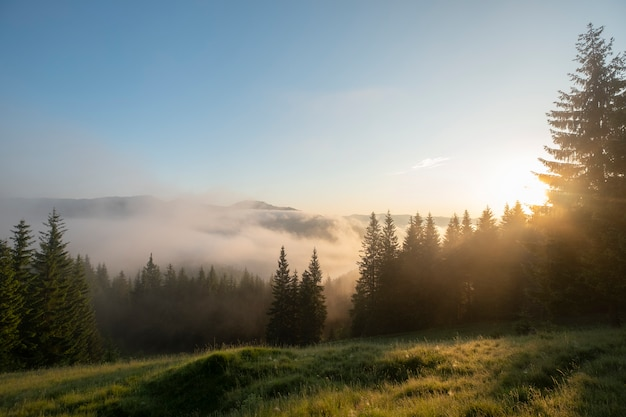 Colora a imagem das nuvens que fluem através dos pinheiros ao longo de blue ridge parkway no oeste da carolina do norte.