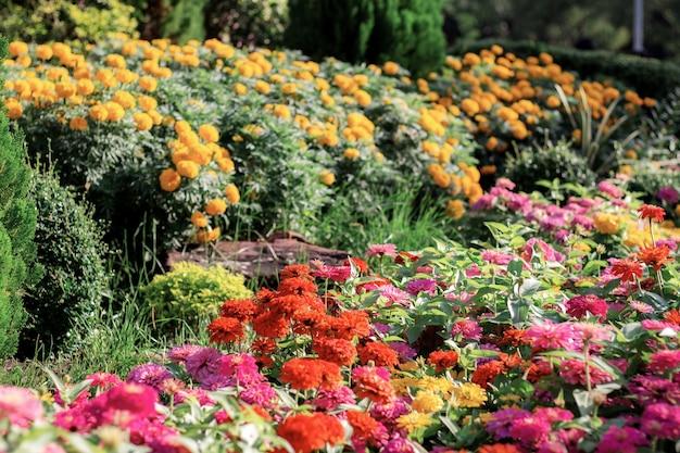 Colorido da flor no jardim.