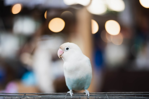 Colorido de papagaio sentado na gaiola.