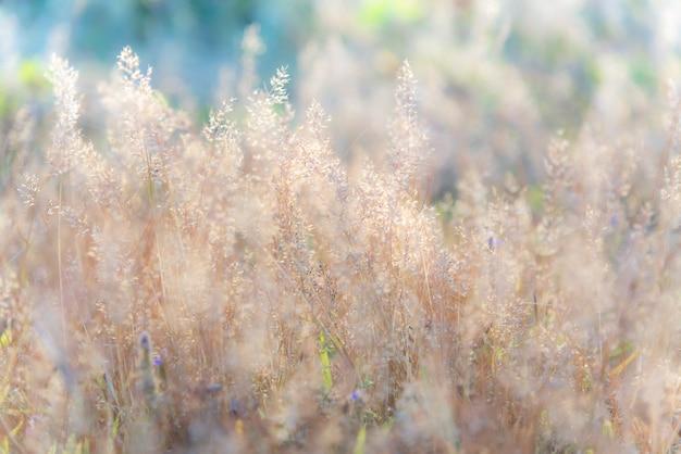 Colorido doce brilhante fresco vívido da imagem macia borrada da flor da grama.