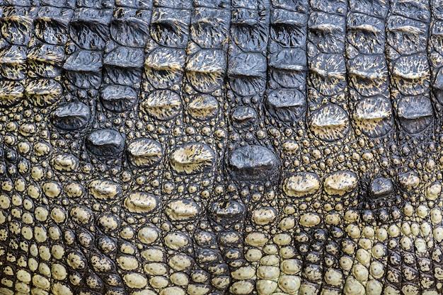 Colorido e pele de crocodilo.