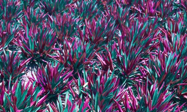 Colorido em cores vibrantes em gradiente holográfico floral fundo natural