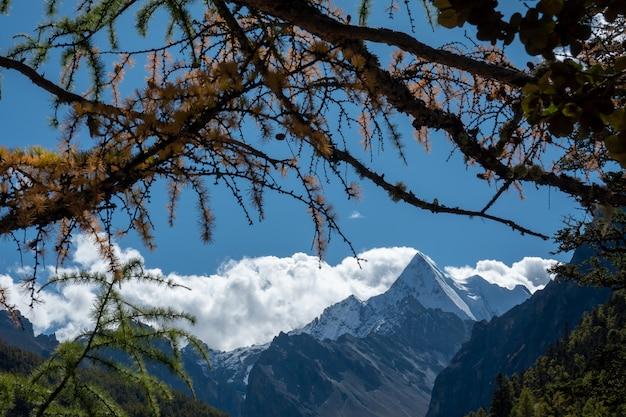 Colorido na floresta de outono e montanha de neve na reserva natural de yading