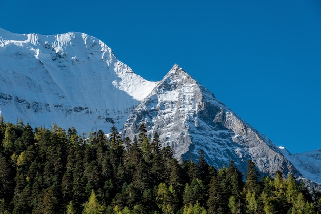 Colorido na floresta de outono e montanha de neve
