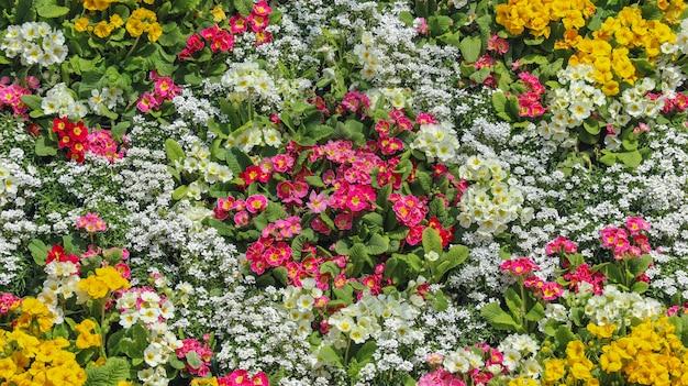 Colorido várias flores datilografam o fundo do campo do projeto do ramalhete.