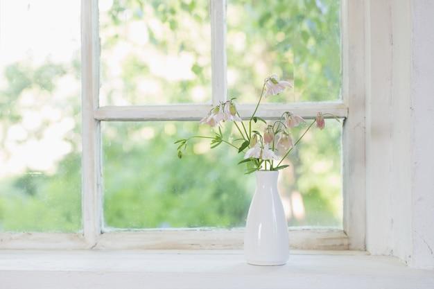 Columbine flores em um vaso branco no peitoril da janela