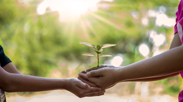 Com ambas as mãos os humanos plantam mudas ou árvores no solo com o conceito de preservação ambiental