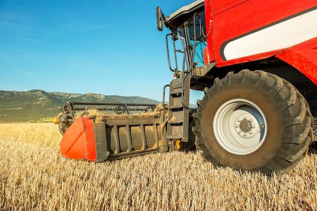 Combine a colheita de grãos ao sul do campo de trigo da itália na apúlia